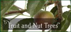 Fruit and Nut Trees