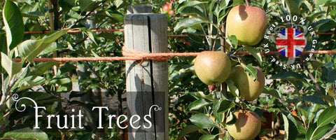 Fruit Tree Gifts