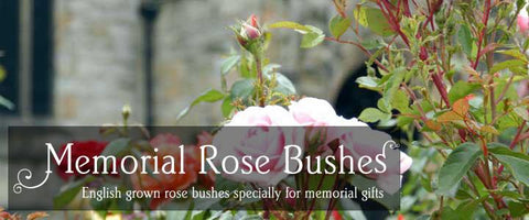 Memorial Rose Bushes