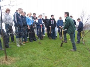 Tree Planting in Northern Ireland