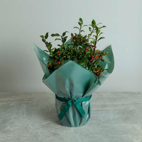 Christmas Holly Bush Gift