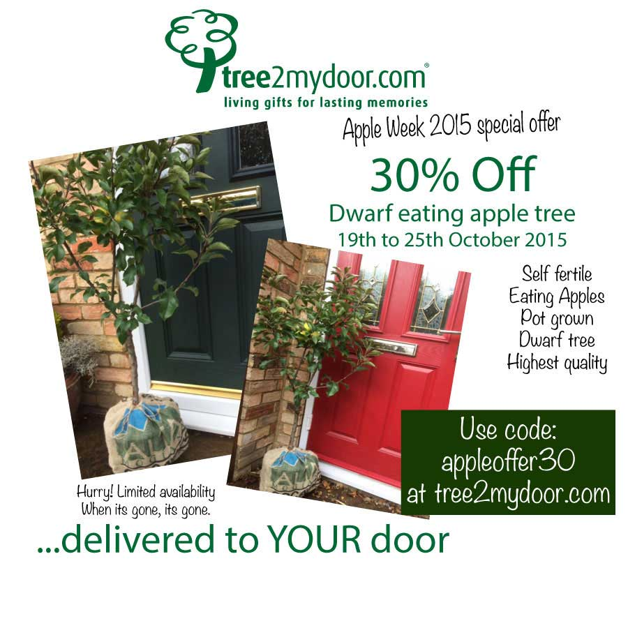 apple tree for sale