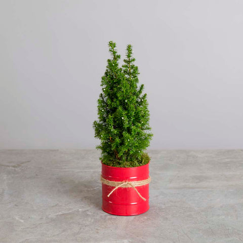 Miniature Christmas Tree Gift