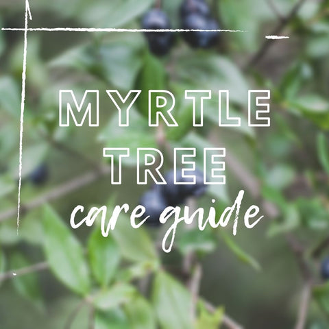 Myrtle Tree Care Guide