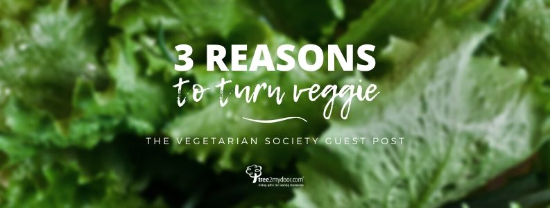 Reasons to turn Vegetarian