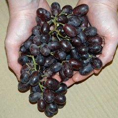 Red Grape Vine Gift
