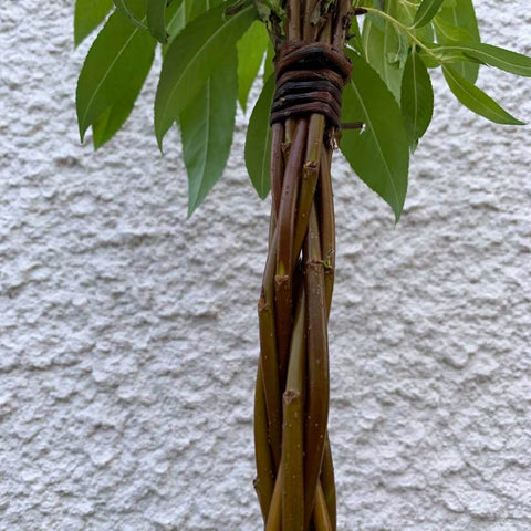 Willow Wand Woven Stem