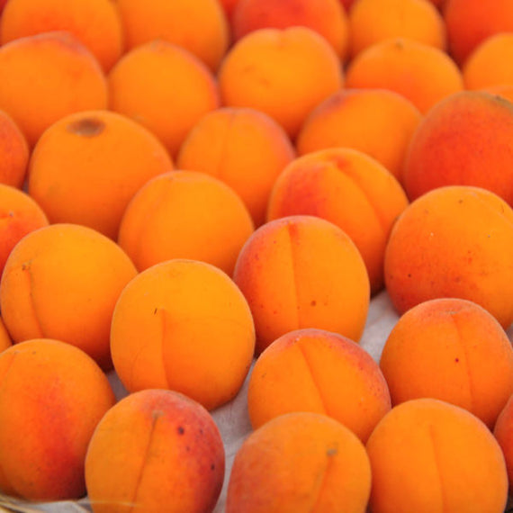 Buy an Apricot Tree Online