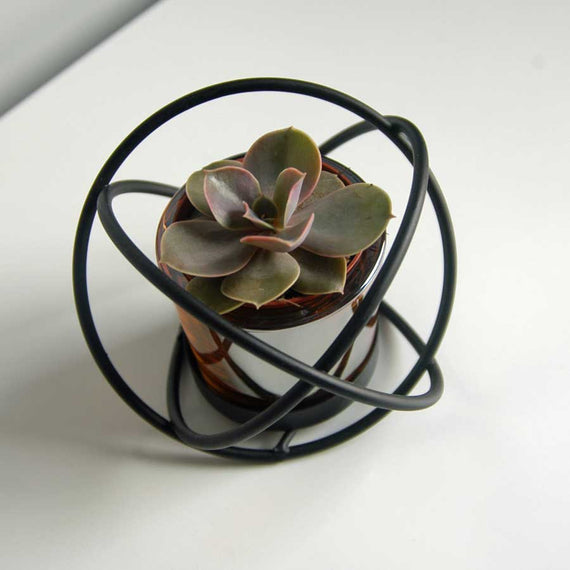 Small succulent plant in black knot frame