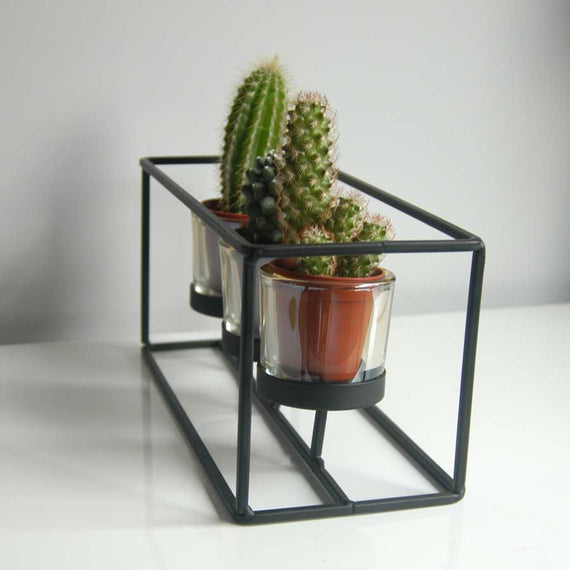 Three indoor cactus plants in black frame