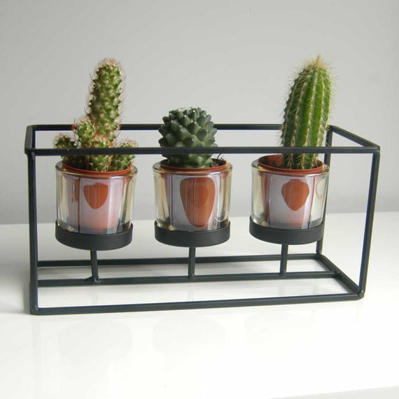 Cactus trio in thin black contemporary frame