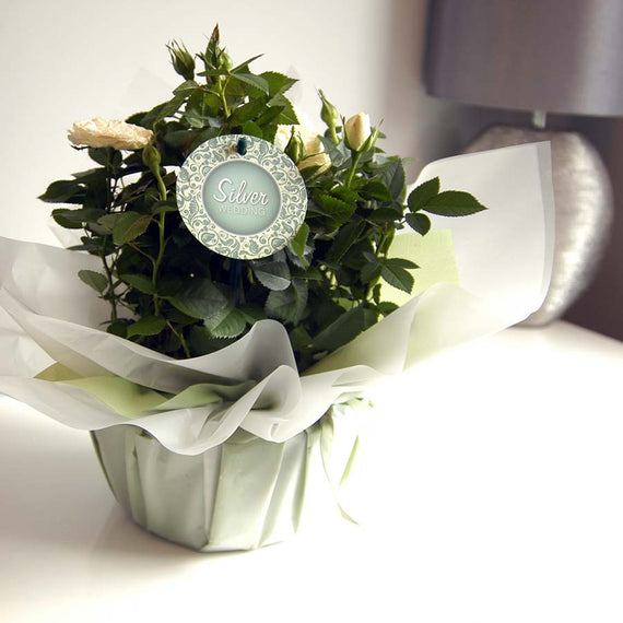 Silver Wedding Indoor Rose Planted Bouquet