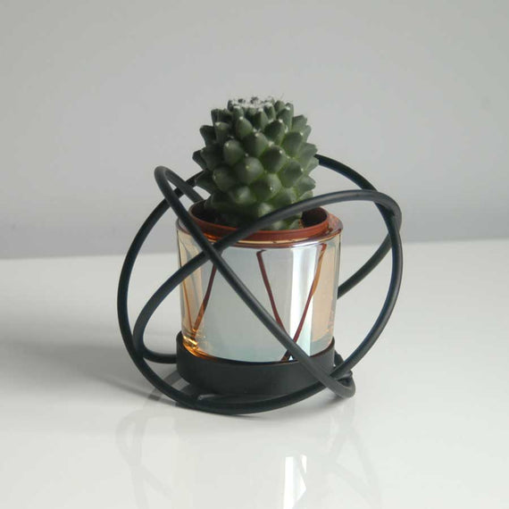 Single Cactus Plant in Knot Frame