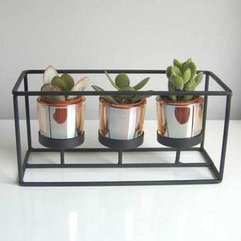 Succulent Trio in Thin Black Contemporary Frame