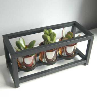Succulent trio in a black metal frame