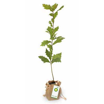 Promotional Tree in Hessian Bag