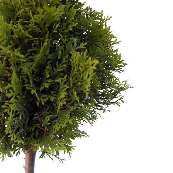 3 Ball Topiary Online