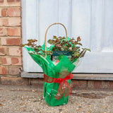 Gift Wrapped Blooming Marvellous Rose Bush