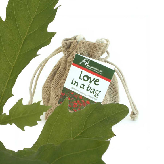 Fathers Day Oak Tree Gift Set