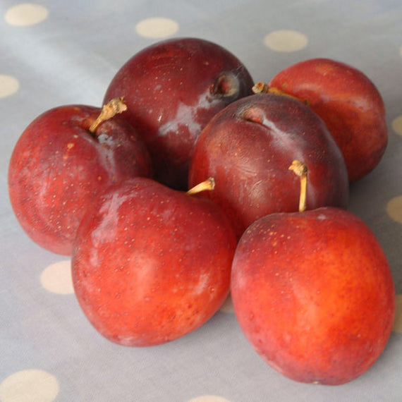 Buy a Victoria Plum for your Patio
