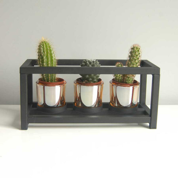 Contemporary indoor cactus holder
