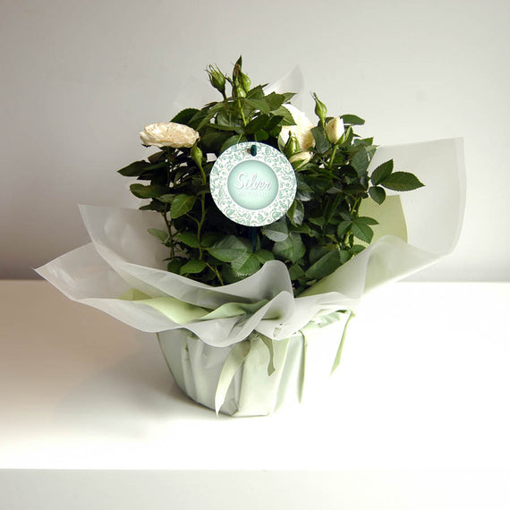 Silver Wedding Indoor Rose Bowl