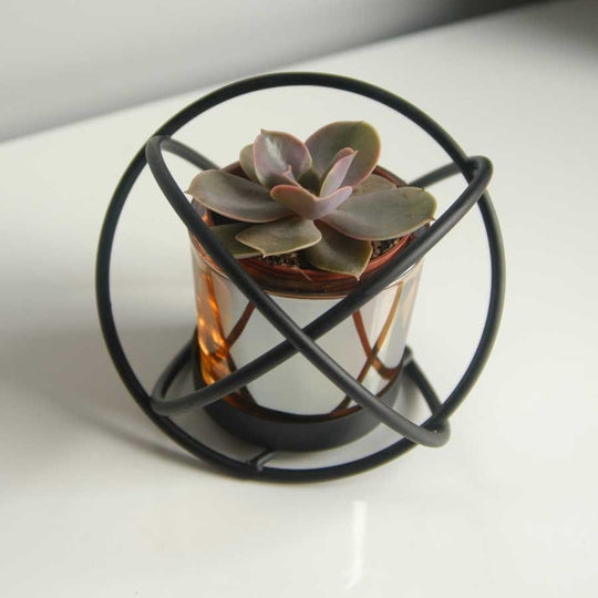 Single Succulent Plant in Knot Frame
