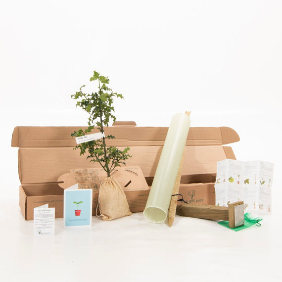 Send a Tree Gift for a Christening