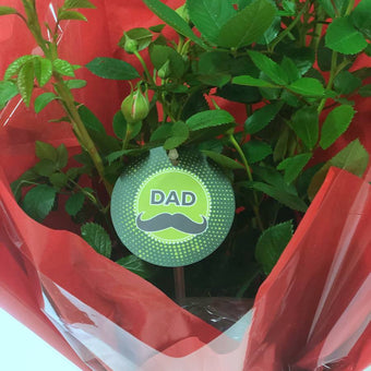 Dad Patio Rose Gift