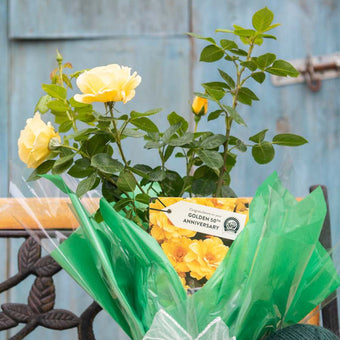 Golden Wedding Rose Bush Gift