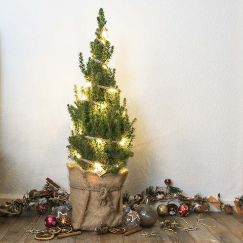 Mini Christmas Tree with Lights