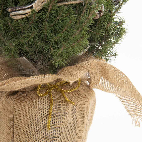 Mini Potted Christmas Tree Wrapped in Hessian