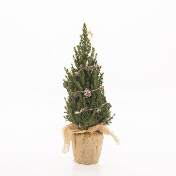 Decorated Mini Potted Picea