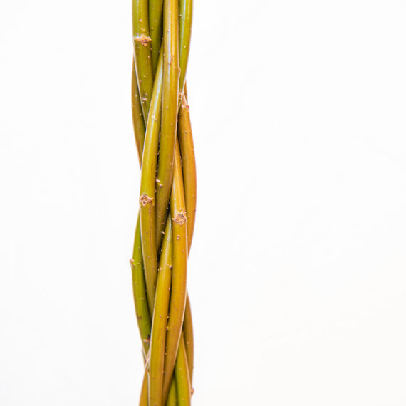 Willow Wand Stem