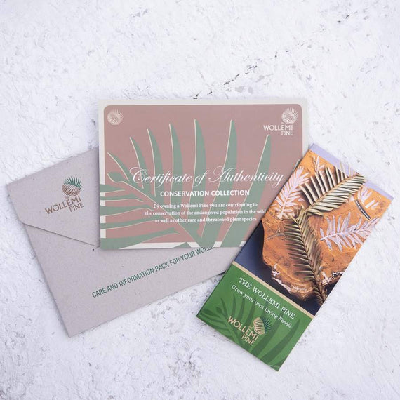 Wollemi Pine Tree Care Package