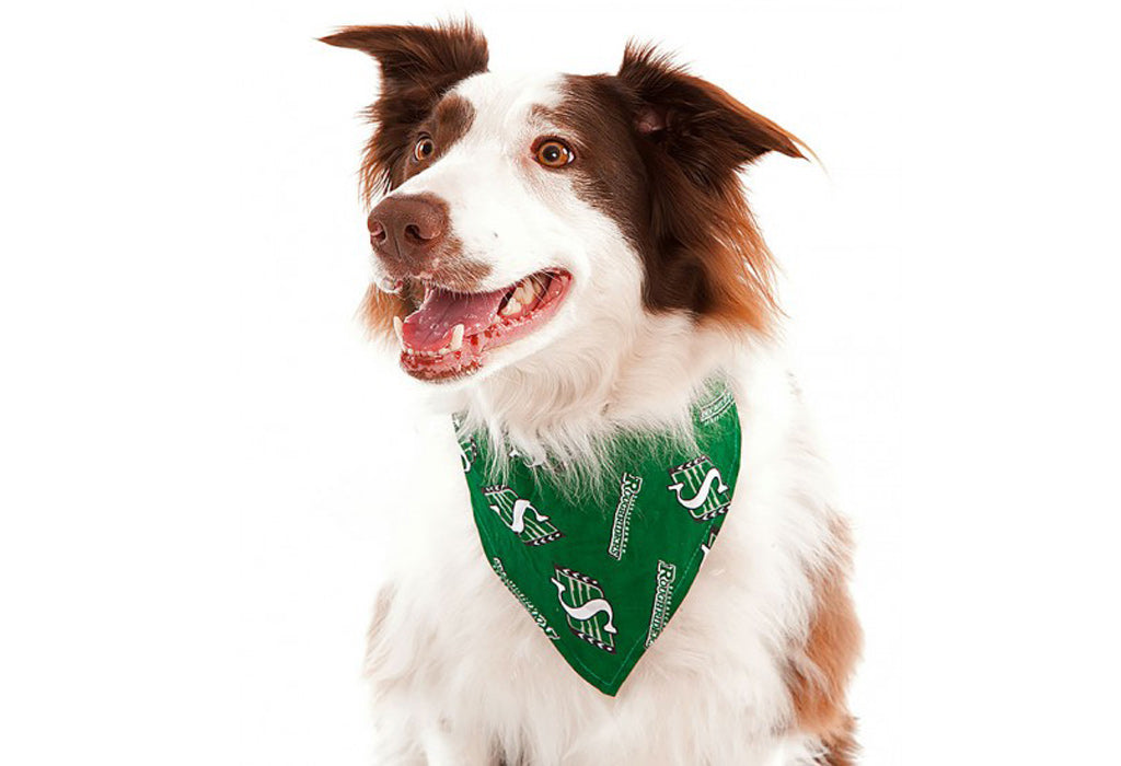 Roughriders dog bandana