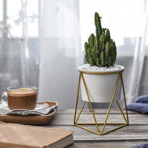 Modern Desktop Mini Flower Pot with Yellow Iron Holder