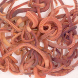 Composting Worms  -  Wormeries