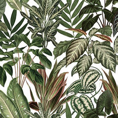Jungle by Day, Monkeys Mural Wallpaper (SqM)