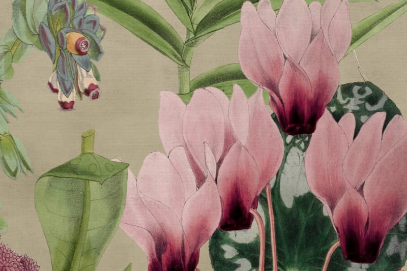 Alice's Pink Botanicals Mural Wallpaper (SqM)