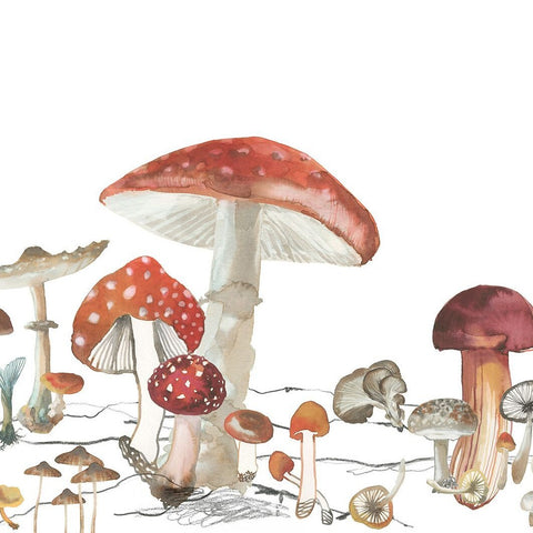 Mushroom Wonder Mural Wallpaper (SqM)