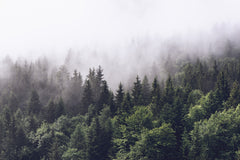 Forest Fog Mural Wallpaper (SqM)