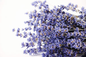 Kelso Lavender, Dried English Lavender Bouquet, Folgate, 12 inches, 200 stems, Close Up View