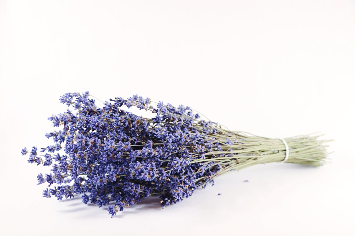 Kelso Lavender, Dried English Lavender Bouquet, Folgate, 12 inches, 200 stems