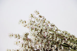 Kelso Lavender, Dried English Lavender Bouquet, Melissa, 10 inches, 200 stems, Close Up View
