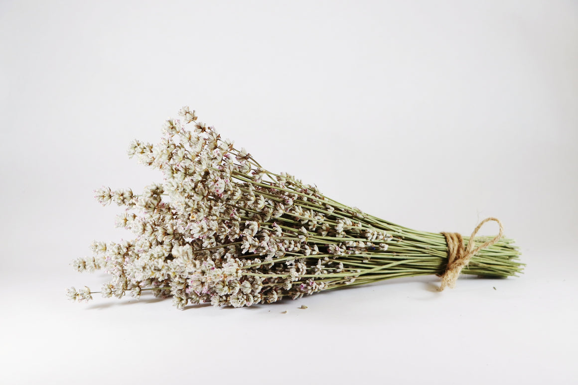 Kelso Lavender, Dried English Lavender Bouquet, Melissa, 10 inches, 200 stems