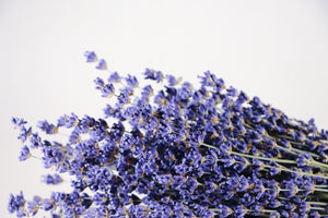 Kelso Lavender, Dried English Lavender Bouquet, Royal Velvet, 14 inches, 200 stems, Close Up View