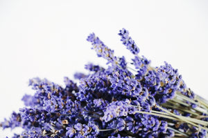 Kelso Lavender, Dried English Lavender Bouquet, Super Blue, 7 inches, 200 stems, Close Up View
