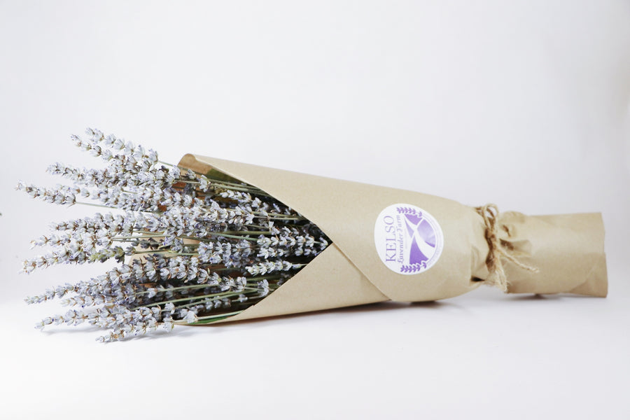 Kelso Lavender, Dried English Lavender Bouquet, Grosso, 16 inches, 200 stems