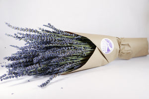Kelso Lavender, Dried French Lavender Bouquet, Phenomenal, 18 inches, 200 stems, Wrapped